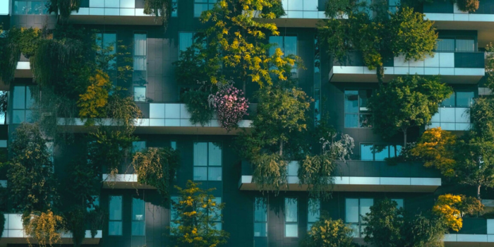 Ecotherapy in the City: How Urban Nature Boosts Wellbeing