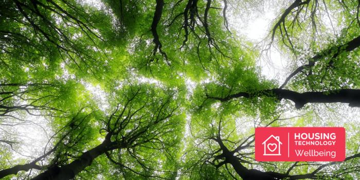 Nurtured by Nature: 5 Ways Nature Improves Your Wellbeing